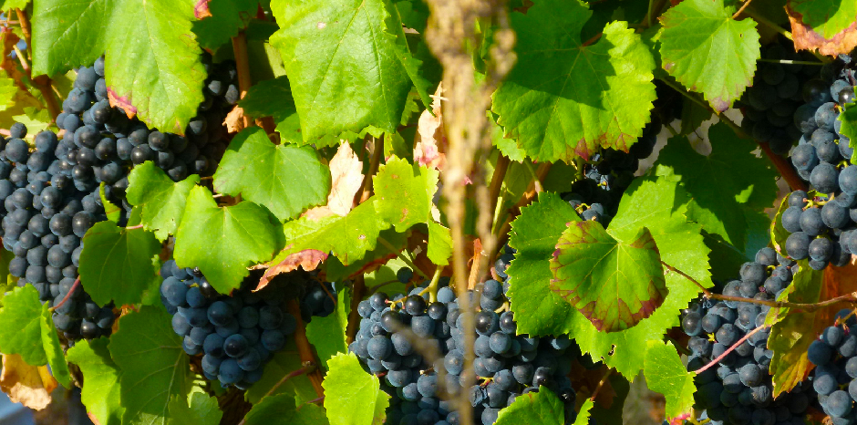 Algarve Wine Route