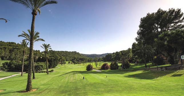 Improvements at the legend Son Vida Golf Course. Son Vida Golf Course